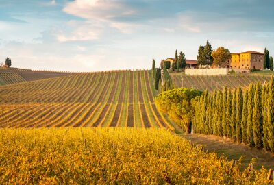 Bild Golden vineyards in autumn at sunset, Chianti Region, Tuscany, Italy
