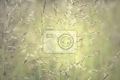 Goldfarbenen verwischt Wiese Gras Details Hintergrund. Geringe Tiefenschärfe verwendet.