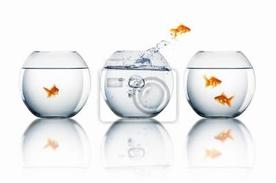 Goldfisch springen