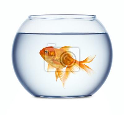 Bild Goldfish in a fishbowl isolated on white background