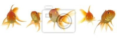 Bild Goldfish lokking