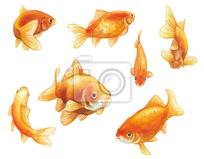 Bild goldfish watercolor painting, a set of hand painted goldfish swimming in various poses