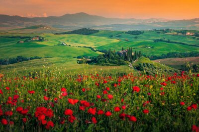 Bild Grain fields with red poppies at sunset in Tuscany, Italy
