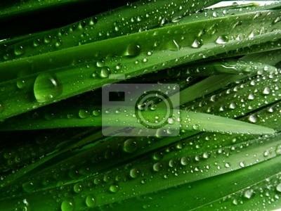 Bild Gras mit regen Tropfen Makro