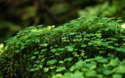 Bild Grass in summer forest. Natural background