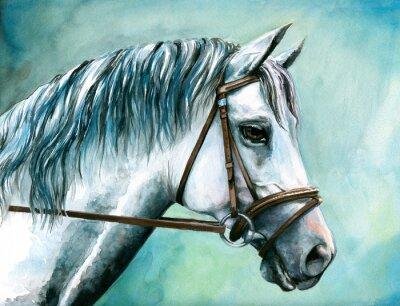 Graues Pferd Aquarell gemalt.