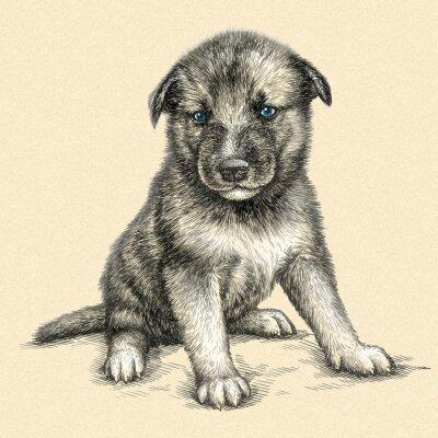 Bild Gravieren Hund Illustration