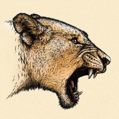 Bild Gravieren Sie Löweabbildung