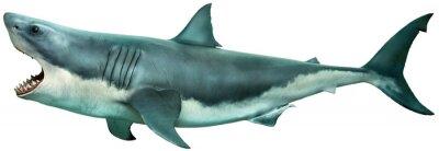 Bild Great white shark side view 3D illustration