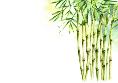 Bild Green bamboo background, stems and leaves, Asian rainforest. Watercolor hand drawn  isolated illustration