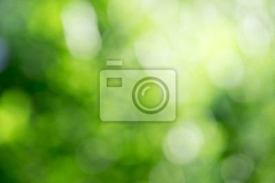 Bild Green bokeh background from nature forest out of focus