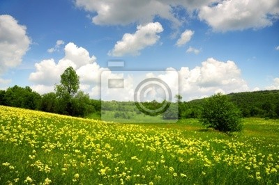Green Feld mit gelben und weißen Wolken