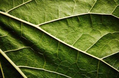 Bild Green leaf