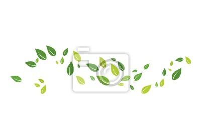 Bild green leaf ecology nature