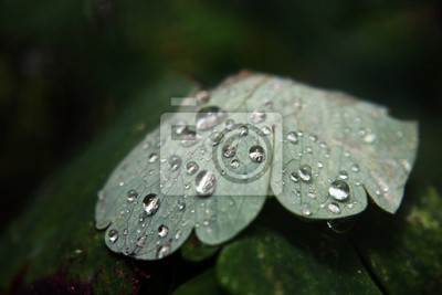 Bild Green Leaf Water Drops - Nature Photography