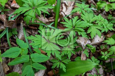 Bild Green leaves