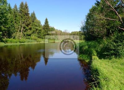 Bild großen Fluss in einem Wald