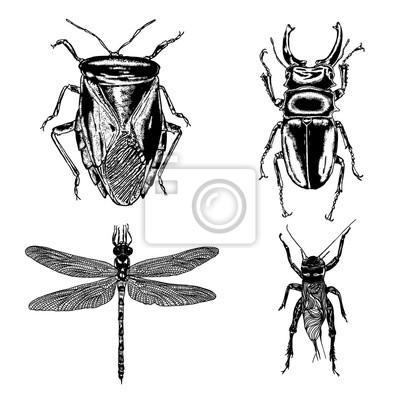 Großer Satz Von Insekten Bugs Fliegende Käfer Viele Arten