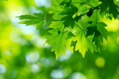 Bild grüne Blätter