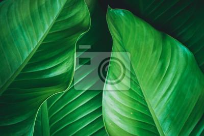 Bild grüne Blätter dunklen Natur Hintergrund