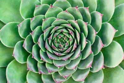 Bild grüne Blume