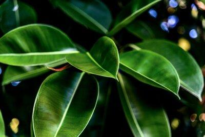 Bild Grüne frische Blätter