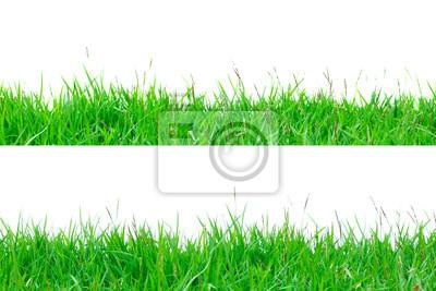 Grüne Gras isolieren auf weißem Hintergrund