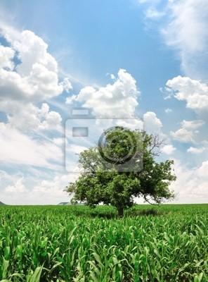 Grüne Maisfeld und einsamer Baum
