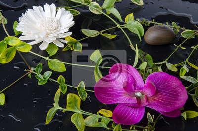 Bild Grüne Pflanzen mit einer lila und einer weißen Blume