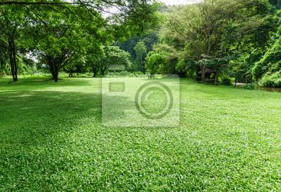 Bild Grüne Rasen Landschaft mit Baum Schatten im Park