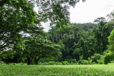 Bild grüne Rasenlandschaft mit Baumschatten im Park