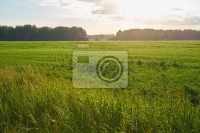 Grüne Wiese mit See und Hügeln