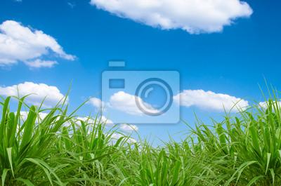 Bild grünen Gras und blauer Himmel