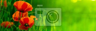 Bild grünen horizontalen Band und rote Blume - Natur und Mohn