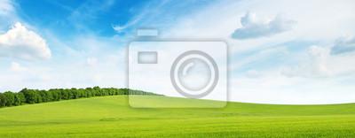 Bild grünen Wiese und blauer Himmel