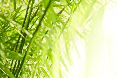 Bild Grüner Bambushintergrund