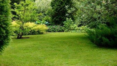 Bild Grüner Rasen, umgeben von schönen Pflanzen in einem gepflegten Garten.