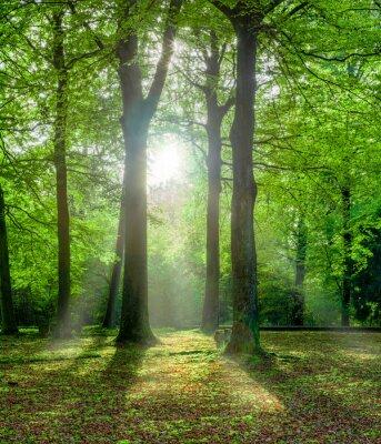 Bild Grüner Wald im Sommer mit Gegenlicht