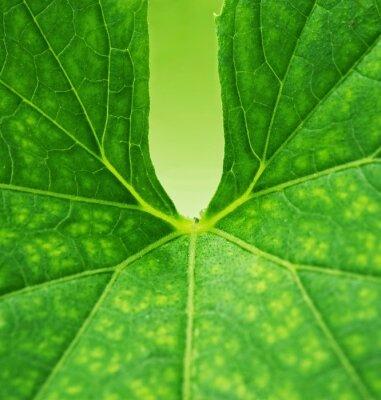 Bild Grünes Blatt Hintergrund