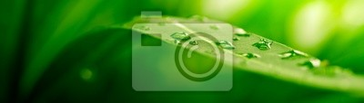 Bild grünes Blatt, Natur-Hintergrund