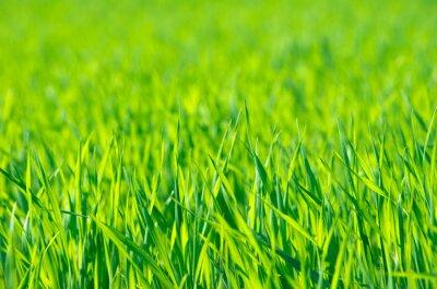 Bild Grünes Gras