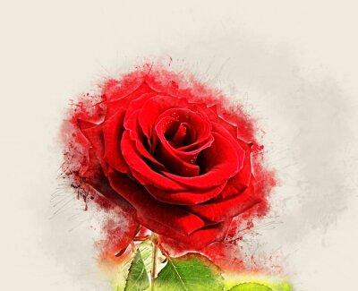 Bild Grunge Rose image