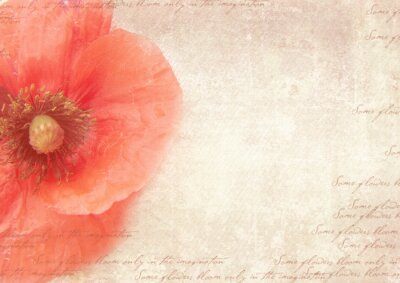 Bild Grungy retro background with poppy flowers. A vintage styled collage with poppy flowers, faded handwriting on shabby old paper.  Postcard template.