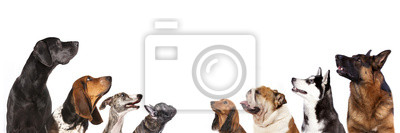 Bild Gruppe von Hunden ist nachschlagen