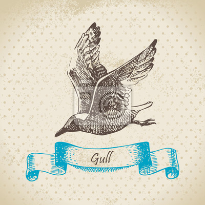 Gull. Hand gezeichnete Illustration.
