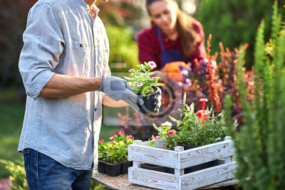 Bild Guy gardener in garden gloves puts the pots with seedlings in the white wooden box on the table and a girl prunes plants in the wonderful nursery-garden on a sunny day.