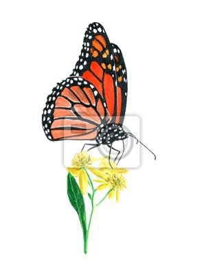 Bild hand drawn oil pastel painting of orange monarch butterfly on yellow flowers, Danaus plexippus