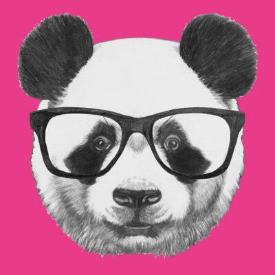 Bild Hand drawn portrait of Panda with glasses. Vector isolated elements.