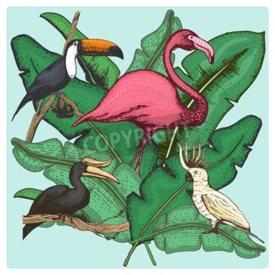 Bild hand drawn vector realistic bird, sketch graphic style, set of domestic. cockatoo parrot and rhinoceros hornbill, toco toucan and flamingo