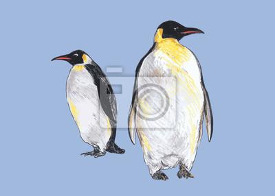 Hand farbige Zeichnung der Pinguine. Vektor-Illustration